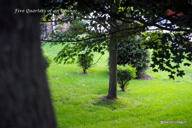 Lush Greens